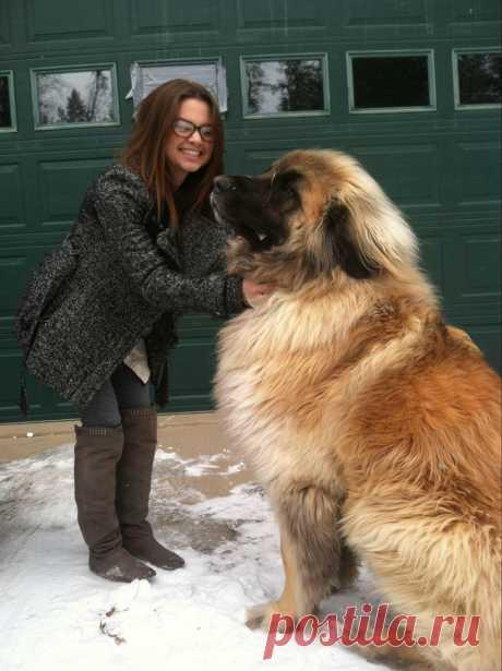 30 редких и экзотических пород собак