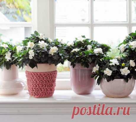 Подборка бытовых подкормок для пышного цветения комнатных растений — Полезные советы
