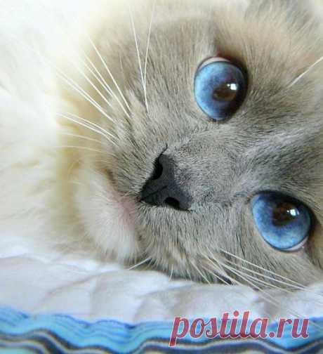 В эти глаза можно смотреть бесконечно...