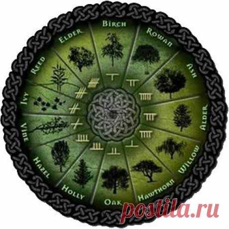 Кельтский гороскоп: совместимость деревьев по гороскопу друидов