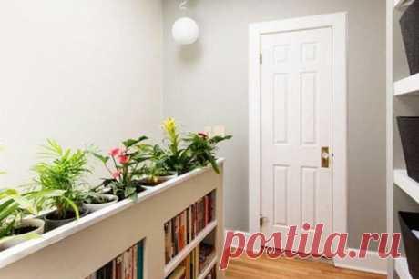 Выбираем комнатные растения для прихожей: тенелюбивые и теневыносливые, декоративнолистные, цветущие, ампельные