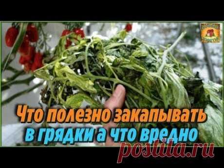 Ботву каких растений ПОЛЕЗНО ЗАКАПЫВАТЬ в грядки а каких ВРЕДНО при уборке урожая ДАЧНЫЕ ХИТРОСТИ