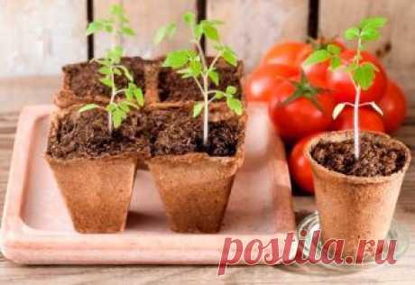КОГДА сажать (сеять) ПОМИДОРЫ на рассаду в 2019 году по Лунному календарю. Посадка томатов на рассаду в домашних условиях