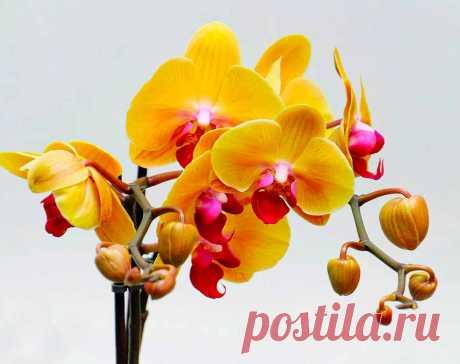 Десять самых популярных ошибок в уходе за орхидеями