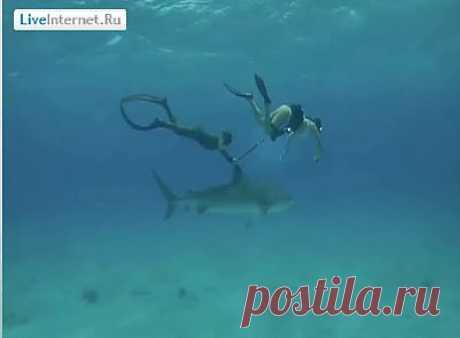 Потрясающее подводное путешествие с итальянской экстремалкой Робертой Манчино.