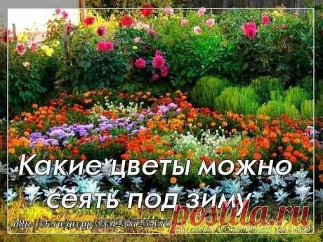 КАКИЕ ЦВЕТЫ МОЖНО СЕЯТЬ ПОД ЗИМУ    Цветы посаженные под зиму будут отличаться хорошим ростом, устойчивостью к болезням и погодным условиям.    Так же, посеяв семена под зиму вы освобождаете себе время весной. А его как раз тогда и не хватает.    Цветы, которые можно посадить осенью:  Однолетники: бархатцы; василек; резеду; космею; настурцию; амарант; дельфиниум; маттиола. Мак, адонис летний, алиссум морской, астра китайская, гвоздика китайская, годеция крупноцветковая. Иберис горький