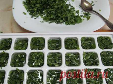 Как заморозить базилик на зиму – cпособы заморозки пряной зелени + Видео
