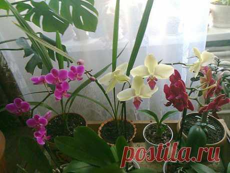 Забавный плюс от орхидеи.   САД НА ПОДОКОННИКЕ