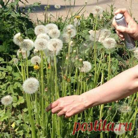 We do an air bouquet of live dandelions which will stay till next summer \/ Needlework