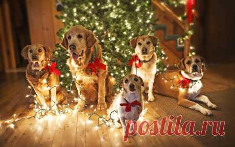 Как встречать Новый 2018 год Желтой Собаки: советы астрологов 👍 Новый год 2018 вступит в права под добрым покровительством Желтой Земляной Собаки.