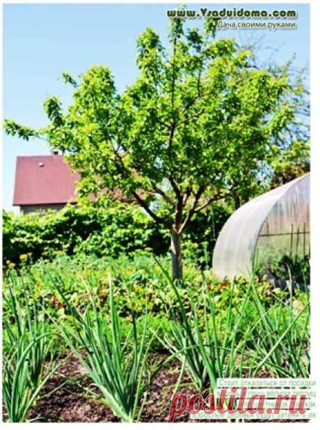 Сад своими руками - ошибки при планировке и посадке | Сайт о саде, даче и комнатных растениях.