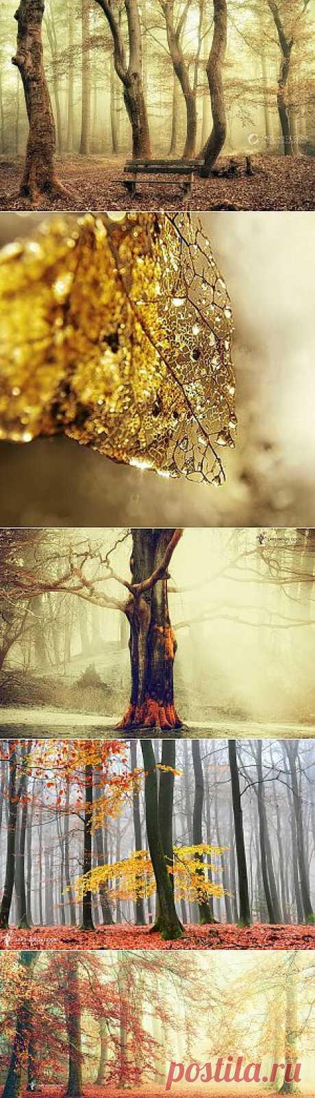 И бродит ноябрь уныло.... Фотограф Lars van de Goor.