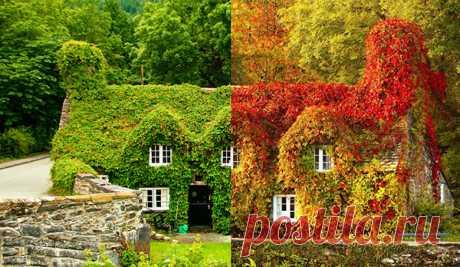 Потрясающе живописные места, раскрашенные самой осенью, чтобы напомнить, насколько прекрасна осень и мир вокруг: