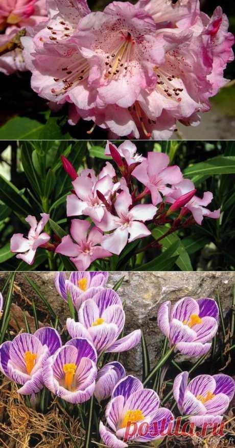 7 красивых и смертельно опасных цветов