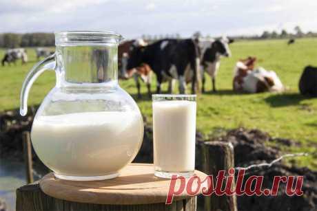 Неприятные факты о молоке, которые нужно знать каждому – польза и вред!