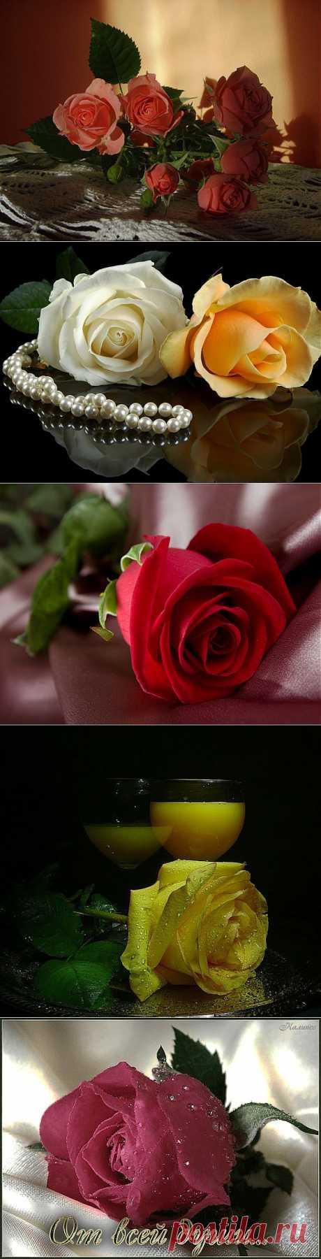 Омар Хайям о розе.
