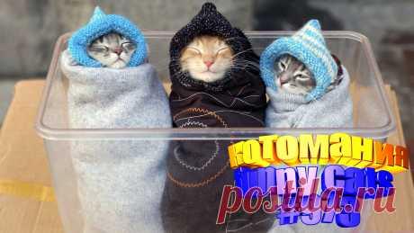Вам нравится смотреть смешные видео про котов? Тогда мы уверены, Вам понравится наше видео 😍. Также на котомании Вас ждут: видео кот,видео кота,видео коте,видео котов,видео кошек,видео кошка,видео кошки,видео о котах, видео про кота, видео смешное о кошках, видео эти смешные кошки, коты видео, кошек смешные, кошки видео, приколы про животных до слез, прикольные коты, с котами, смешно котики, смешные видео с кошками, смешные кошки видео