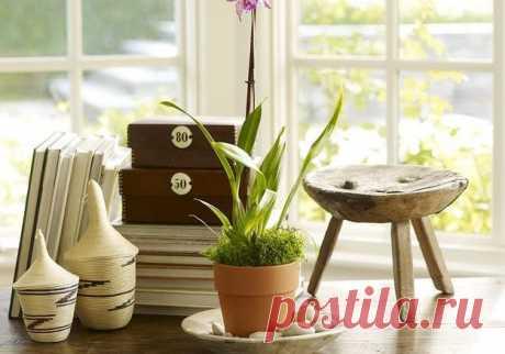 Неприхотливые растения для дома — Наши дома