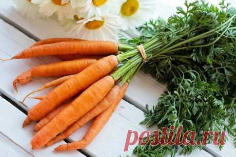 Лечебные свойства моркови — Интересные факты