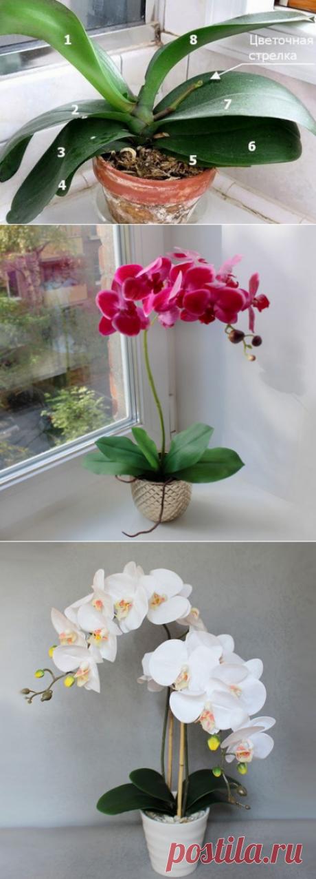 9 правил, благодаря которым орхидея будет буйно цвести круглый год. И всё исключительно своими руками