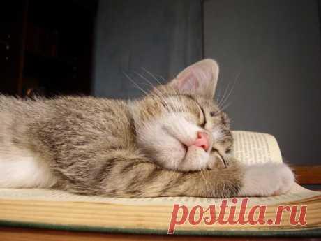 Уснул на самом интересном месте:)