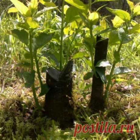 HOW to FIGHT AGAINST YOUNG GROWTH FROM GARDEN TREES - Mirtesen