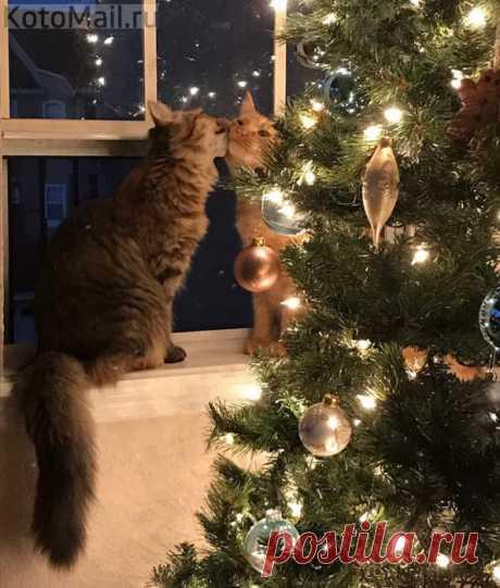 Con la Navidad, caro