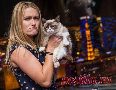 Как стать миллионером, если вы кот » Notagram.ru 10 секретов успеха самого богатого кота в мире. На чем зарабатывает кот и бренд Grumpy Cat. Путь к успеху от Grumpy Cat. Биография Grumpy Cat.