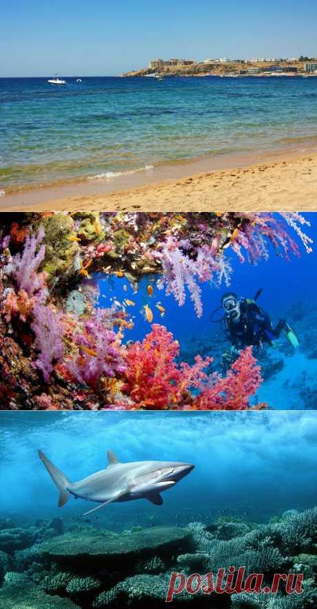 10 фактов о Красном море : НОВОСТИ В ФОТОГРАФИЯХ
