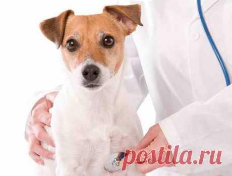 """Консультаційні послуги - Ветеринарний кардіологічний консультаційний центр"""""""