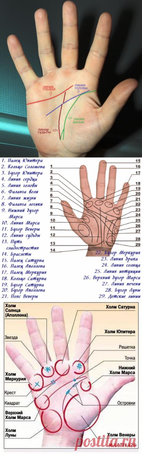 Как определить болезнь по руке - 75 примет » Женский Мир