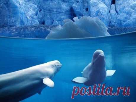 Фотографии на грани: надводный и подводный мир в одном снимке.