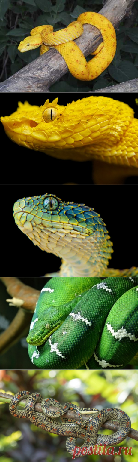 10 опасных змей в тропических лесах Амазонки