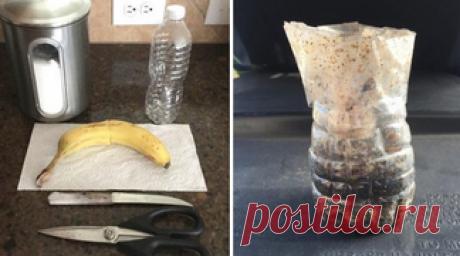 Пластиковая бутылка, вода, банан и секретный ингредиент — вот что избавило меня от насекомых!
