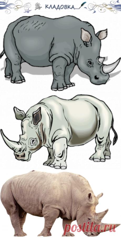 Кладовка...: Носороги - на прозрачном фоне