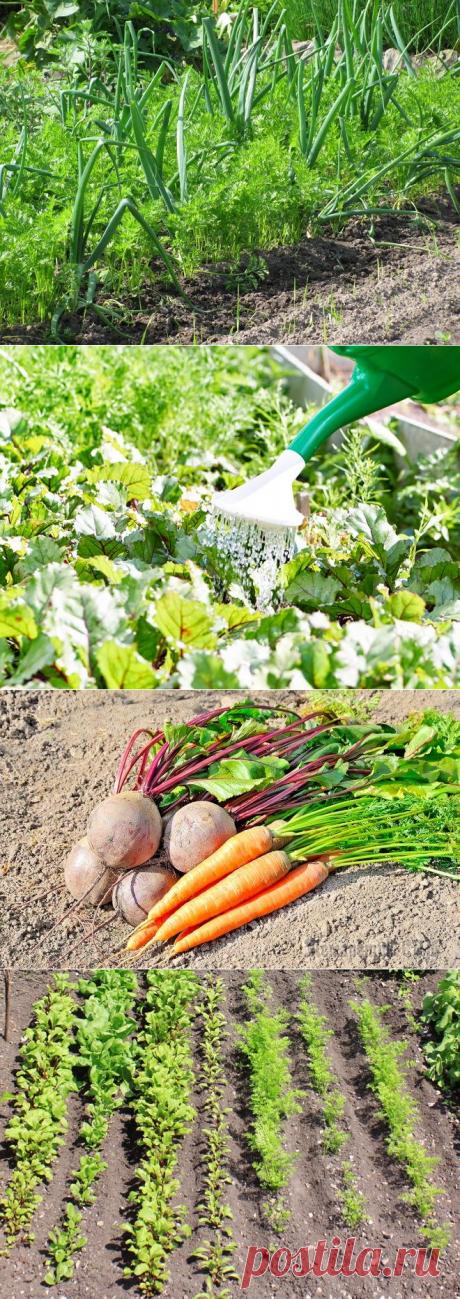 Que la remolacha y la zanahoria sean los postres …