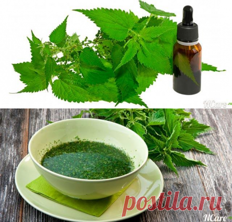 Nettle face and hair oil: advantage, application, the best brands and recipe of preparation
