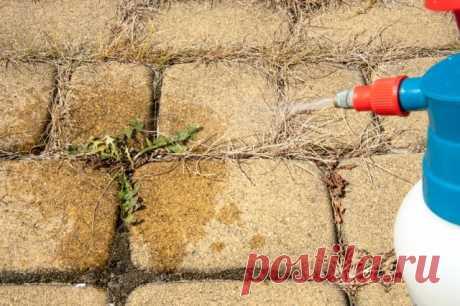 Как избавиться от сорняков на садовых дорожках | Почва и плодородие (Огород.ru)