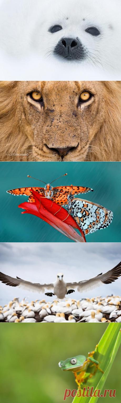 20 фотографий, на которых природа смотрит на тебя