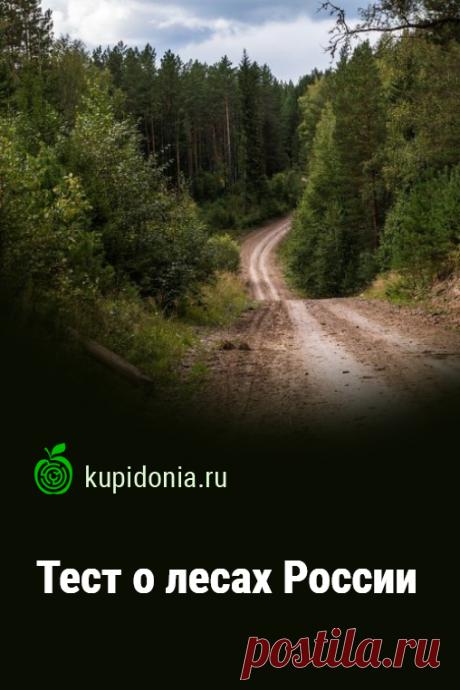 Тест о лесах России. Тест по окружающему миру о лесах России. Материал для учителей и школьников. Проверьте свои знания!