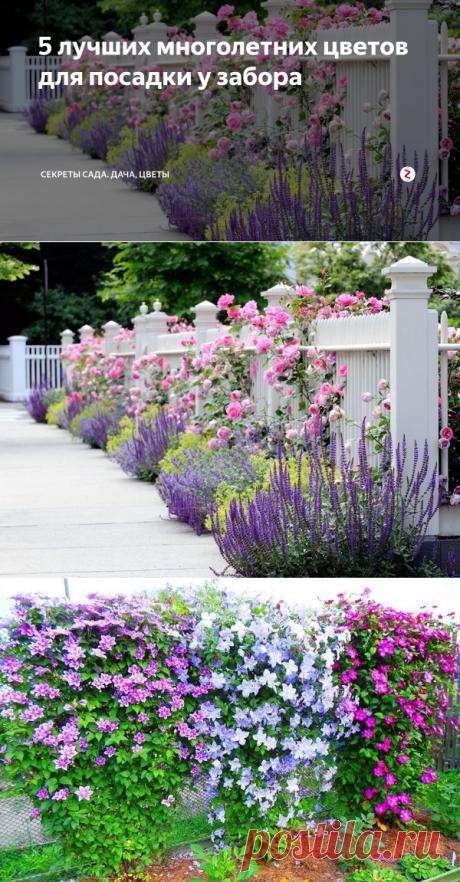 5 лучших многолетних цветов для посадки у забора | Секреты сада. Дача, цветы | Яндекс Дзен