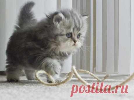 Как приучить котёнка к лотку в квартире легко и быстро: полезные советы