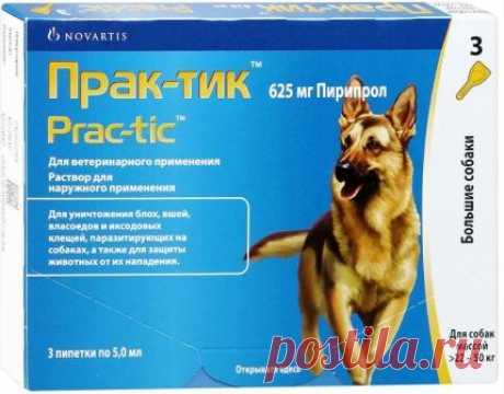 Лучшие химические и народные средства от блох для собак Собачьи кровососы, а именно блохи, доставляют немало проблем не только собственно донору, но и хозяевам ...