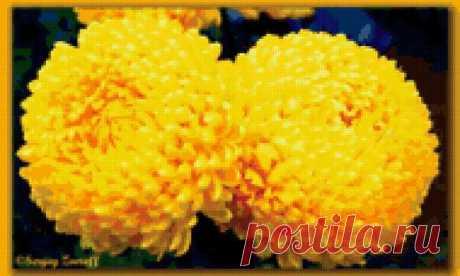 Предпросмотр - Схема вышивки «Желтые хризантемы» - Автор «doxy» - Авторы - Вышивка крестом