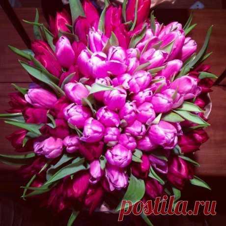 Тульпаны