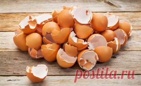 Моя свекровь никогда не выбрасывает яичную скорлупу! Когда узнала почему — начала делать так же!