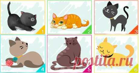Тест: кошка, которую вы выберите, расскажет многое о вашей личности — Бабушкины секреты
