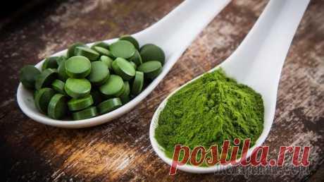 Спирулина: полезные свойства и противопоказания Здравствуйте, уважаемые читатели блога. Хотите ли вы оздоровить организм и обогатить его полезными витаминами и минералами? Важно ли вам чувствовать себя бодрым и полным жизненной энергии? Заботитесь ...