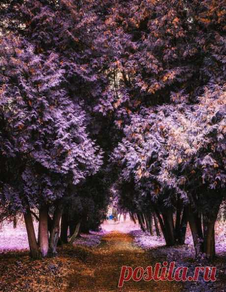 лиловая осень в Пушкине