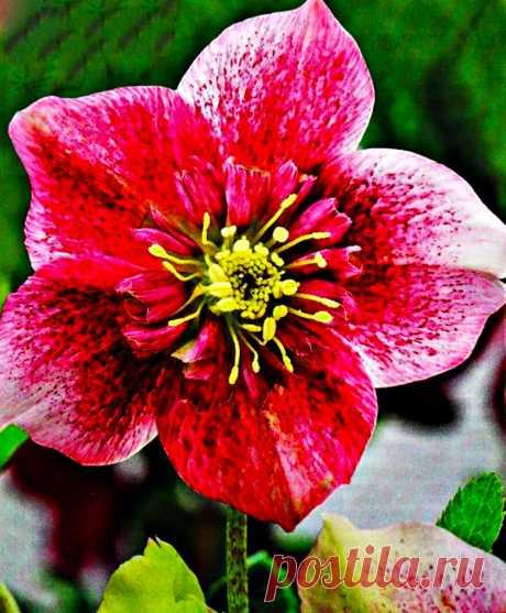 Неизменный цветочный фаворит начала сезона